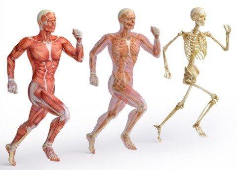 Что полезно для суставов и позвоночника