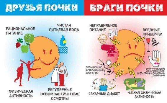Профилактика заболеваний почек и рациональное питание