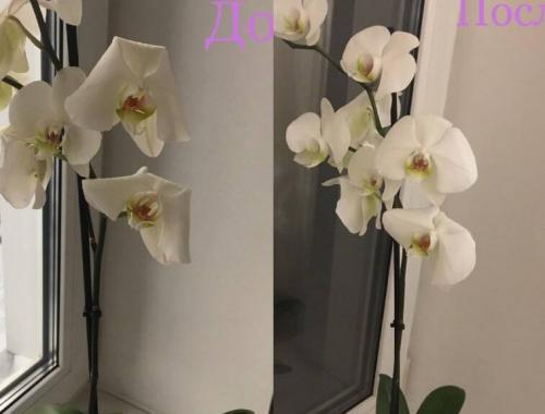 вянет орхидея