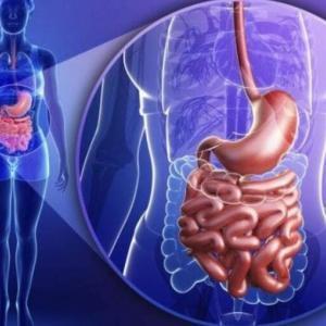 жкт и система мочевыделения