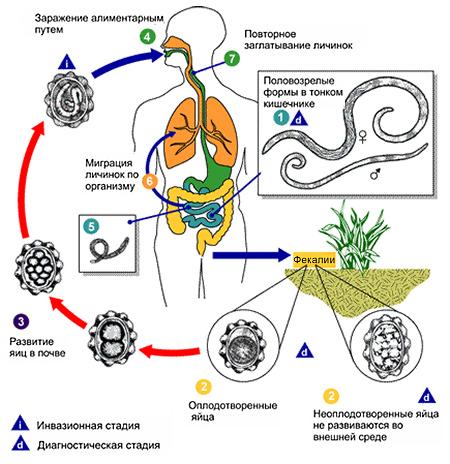 геогельминты